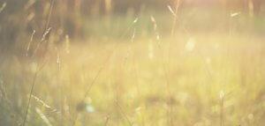 grass-twigs-cones-plant-field-summer-sun-light-color-warmth-nature-macro